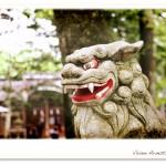 長野県、諏訪神社の狛犬