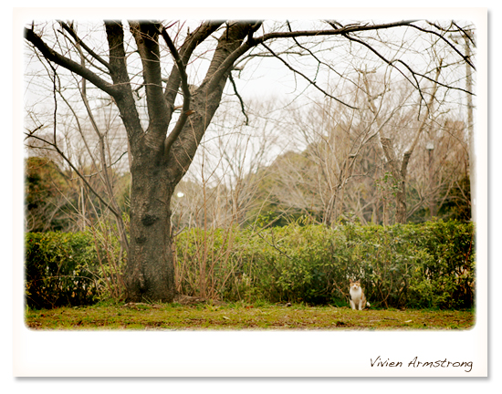 公園のかわいい通り猫
