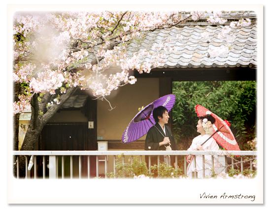 神田川の桜でウェディングフォト