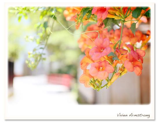 夏の鎌倉で前撮り