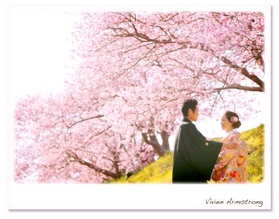 静岡の河津桜で前撮り