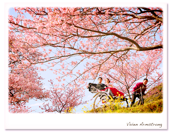 河津桜の桜ロケーションで人力車に乗る新郎新婦
