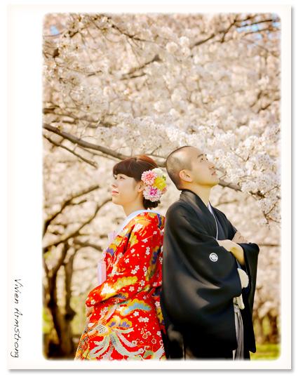 桜の木の下で和装で前撮り