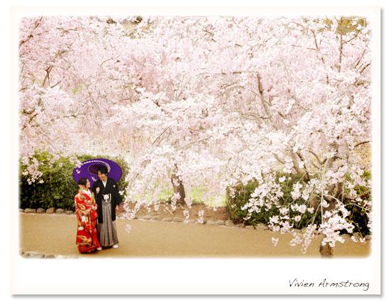 満開の桜で和装前撮り