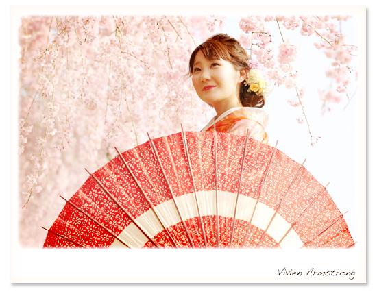 赤い番傘が映える桜ロケーション フォトウェディング