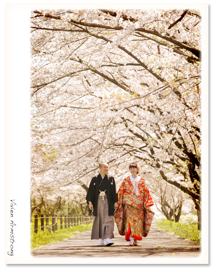 桜並木でフォトウェディング
