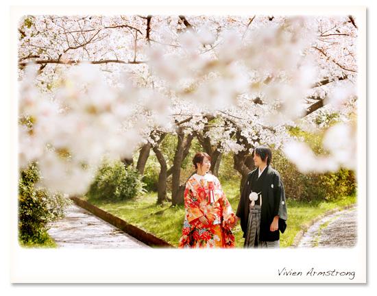 色打掛で桜ロケーションフォト