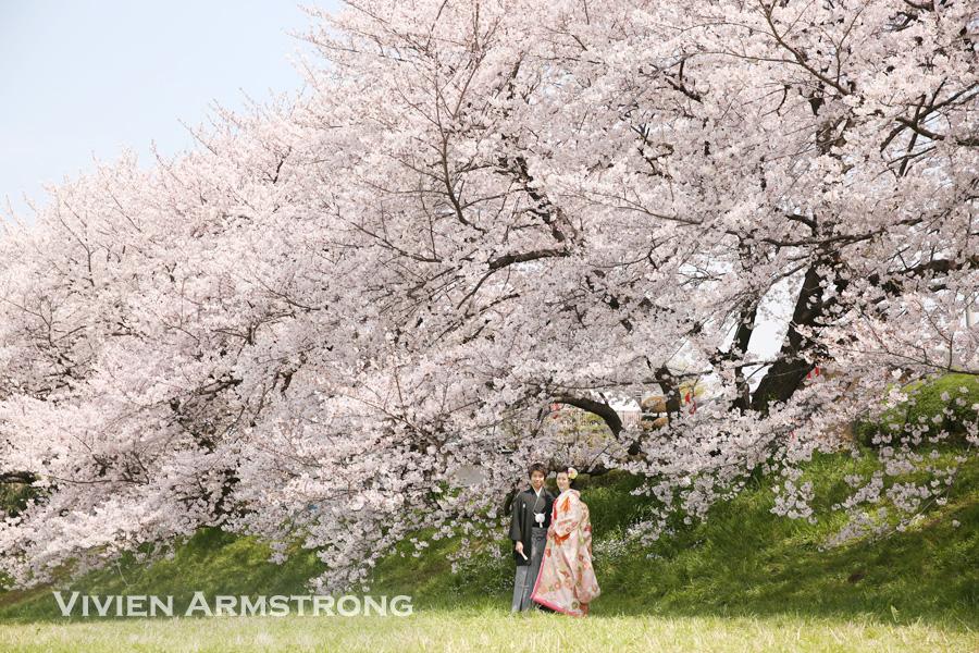 結婚式の前撮りは桜の下で