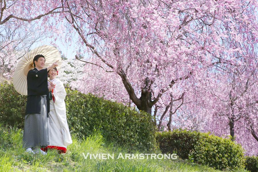 青空と桜の下で前撮り撮影