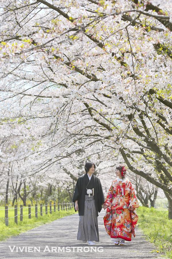 和装前撮り・桜