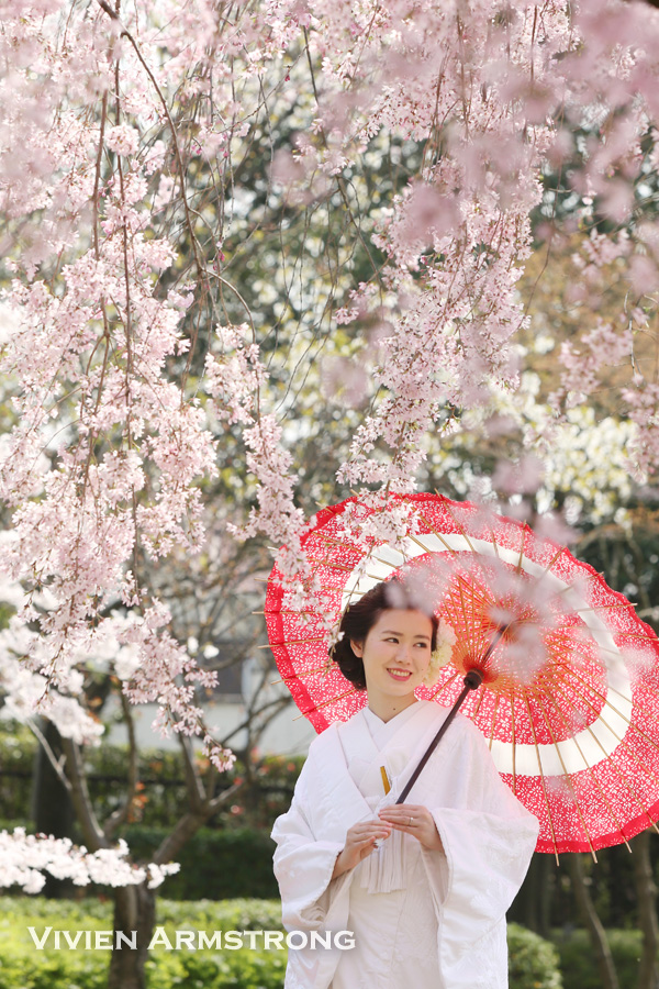 白無垢で桜ロケーション前撮り撮影