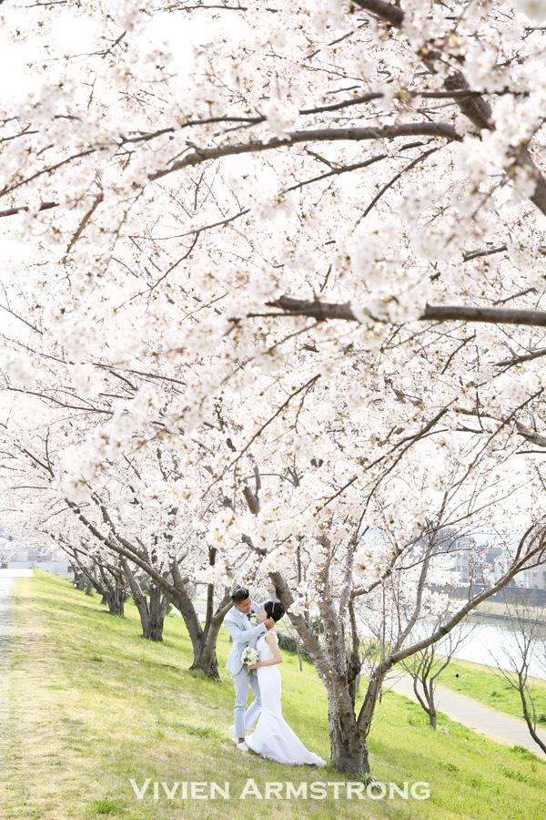 桜の下でウェディングドレスで撮影