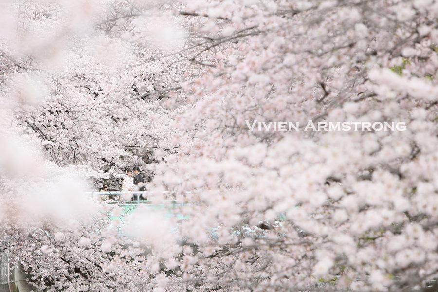 満開の桜に囲まれたフォトウェディング