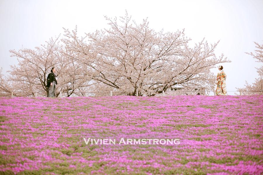 満開の桜と芝桜のロケーションのフォトウェディング*