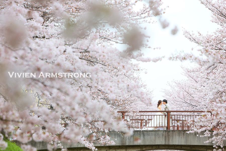 満開の桜並木でフォトウェディング
