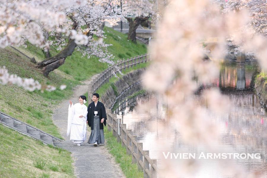 川沿いの桜と前撮り