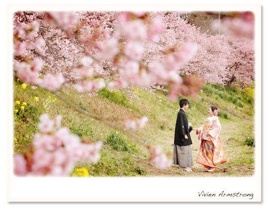 濃いめのピンクが可愛い河津桜とピンクの色打掛でロマンチックな写真に
