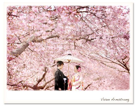 濃いピンクが華やかな河津桜に囲まれて二人だけの憧れの桜ロケーション