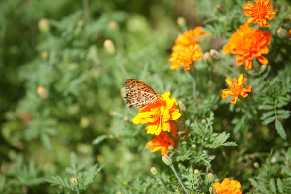 赤坂ブライダルフォトグラファーズの、ちょっといい話-蝶々