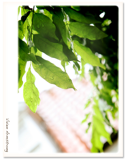 木の葉に雨が降る