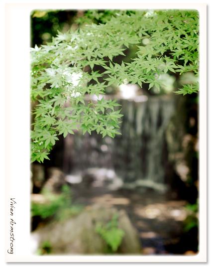 小石川後楽園の「白糸の滝」