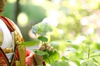 東京の日本庭園で、紫陽花の季節に和装の前撮りをする色打掛を着た新婦のイメージカット