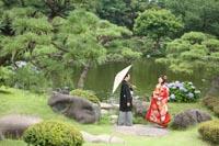 東京の大きな池のある日本庭園で、新緑の季節に和装の前撮りをする、白い和傘を持つ新郎と赤い色打掛の新婦