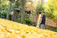 東京の日本庭園で、紅葉の季節に銀杏の絨毯をたっぷり写した季節感のあるウェディングフォトを撮る和装の新郎新婦