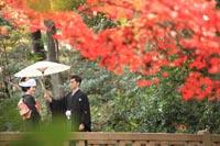 東京の紅葉がきれいな日本庭園で、秋に、和装の前撮りをする、和傘を持つ新郎と、角隠しに黒引き振袖を着る新婦