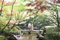 東京の紅葉と新緑がきれいな渡月橋のある日本庭園で、和装の前撮りをする、白い紋付き袴の新郎と色打掛を着た新婦