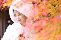 横浜鎌倉三渓園 日本庭園の紅葉する紅葉で和装前撮り