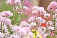 横浜鎌倉 紅葉シーズンの日本庭園で和装前撮り