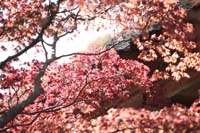 横浜鎌倉 光きらめく日本庭園で和装前撮り