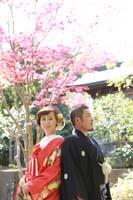 横浜鎌倉三渓園 光きらめく日本庭園の季節の木々や建物を生かした和装前撮り