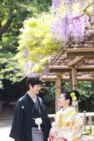 横浜鎌倉三渓園 藤の花の咲く季節に日本庭園で和装前撮り