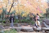 古河邸洋館の日本庭園である古河庭園で黒引き振袖を着てロケーション前撮り