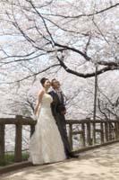 並木道で桜を見上げての洋装桜ロケーションフォトウェディング