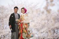 満開の桜の下で寄り添い合う幸せな新郎新婦の桜ロケーション和装前撮りフォトウェディング