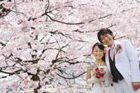 桜ロケーションフォトウェディング
