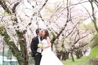 桜並木で桜に包まれるようなふたりの桜ロケーションフォトウェディング
