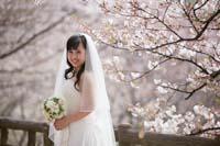 ピンクの桜をバックに上品なベールを付けた花嫁の桜ロケーションフォトウェディング