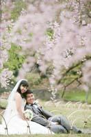 優しいピンクの枝垂れ桜の下で寄り添い合う幸せな新郎新婦の桜ロケーションフォトウェディング