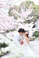 桜でロケーションフォトウェディング