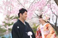 柔らかいしだれ桜の下で幸せに寄り添い合う色打掛の新郎新婦の桜ロケーション和装前撮り