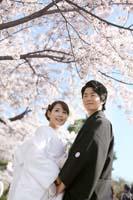 満開の桜と青空の下白無垢での桜ロケーション和装前撮り