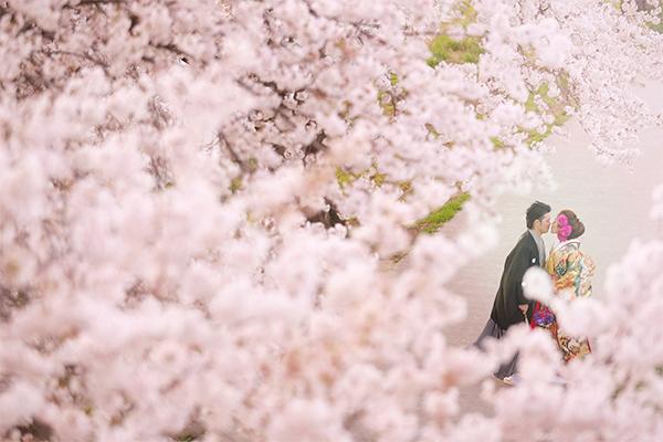 埼玉の桜ロケーション