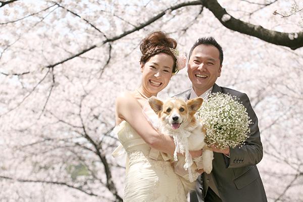 ウェディングドレスでペットと桜ロケーション