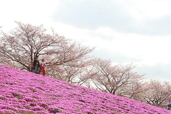 芝桜で前撮り写真