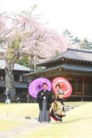 和室の前の桜の下で和傘をさしての和装前撮りフォトウェディング