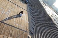 横浜大さん橋でキュートで都会的なフォトウェディング
